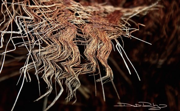 Palm Bark Threads in