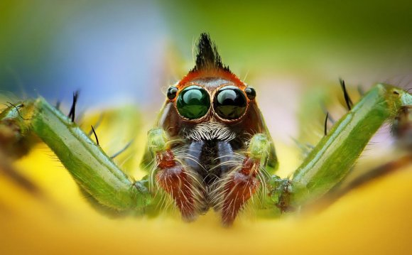 Macro Photography on a Point