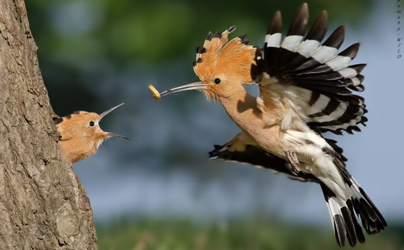 Terrific Birds Photography by