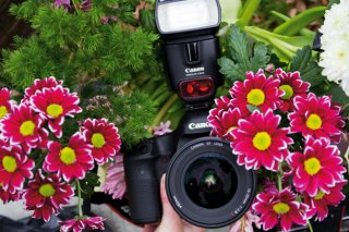 How to set up your pictures of flowers: step 6