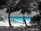 Black and white Photography with color Splash